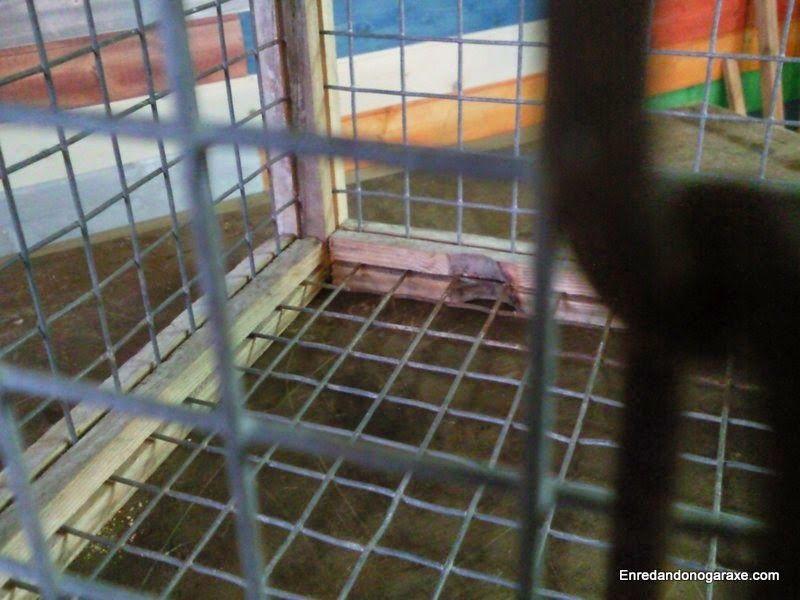 Interior de la jaula celda. enredandonogaraxe.club