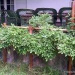 Cómo hacer un tutor para trepadora de jardín