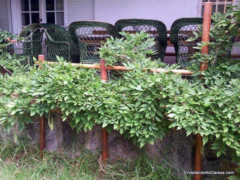 How to Make a Garden Climber Tutor