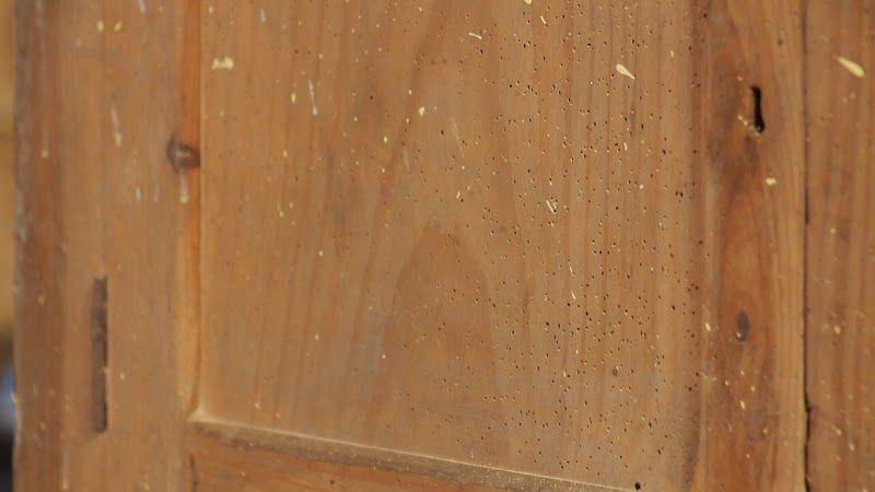 Foto de agujeros de carcoma de la madera